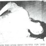 1988 영화